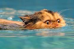 Плуването спорт с дългогодешна история и традиции
