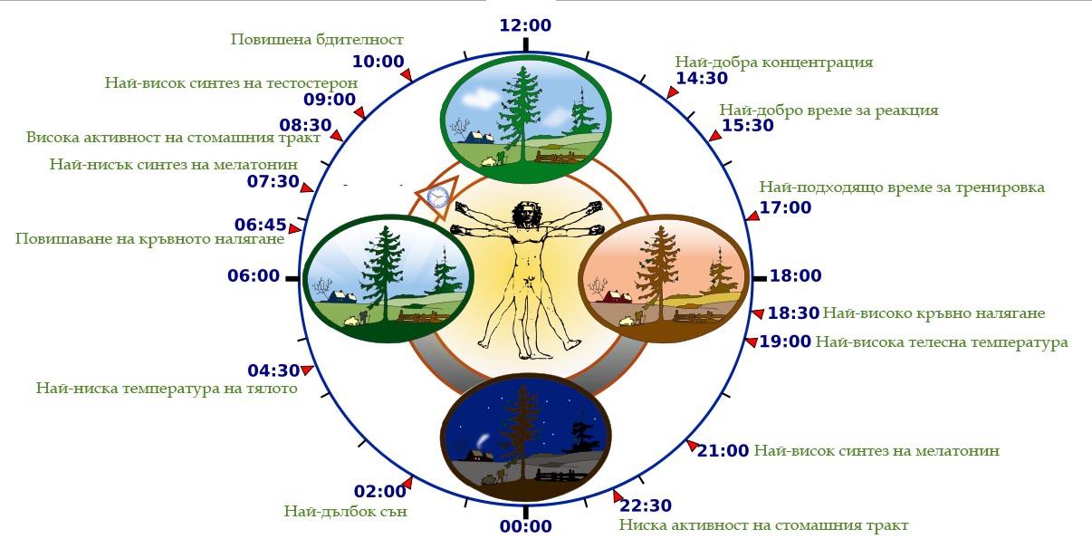 Биологичен часовник - какво се случва в нашият организъм